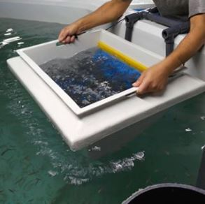 GRP fish sorting cradle